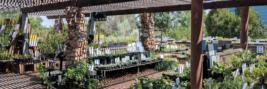Harlequins Gardens Boulder S Specialist In Well Adapted Plants
