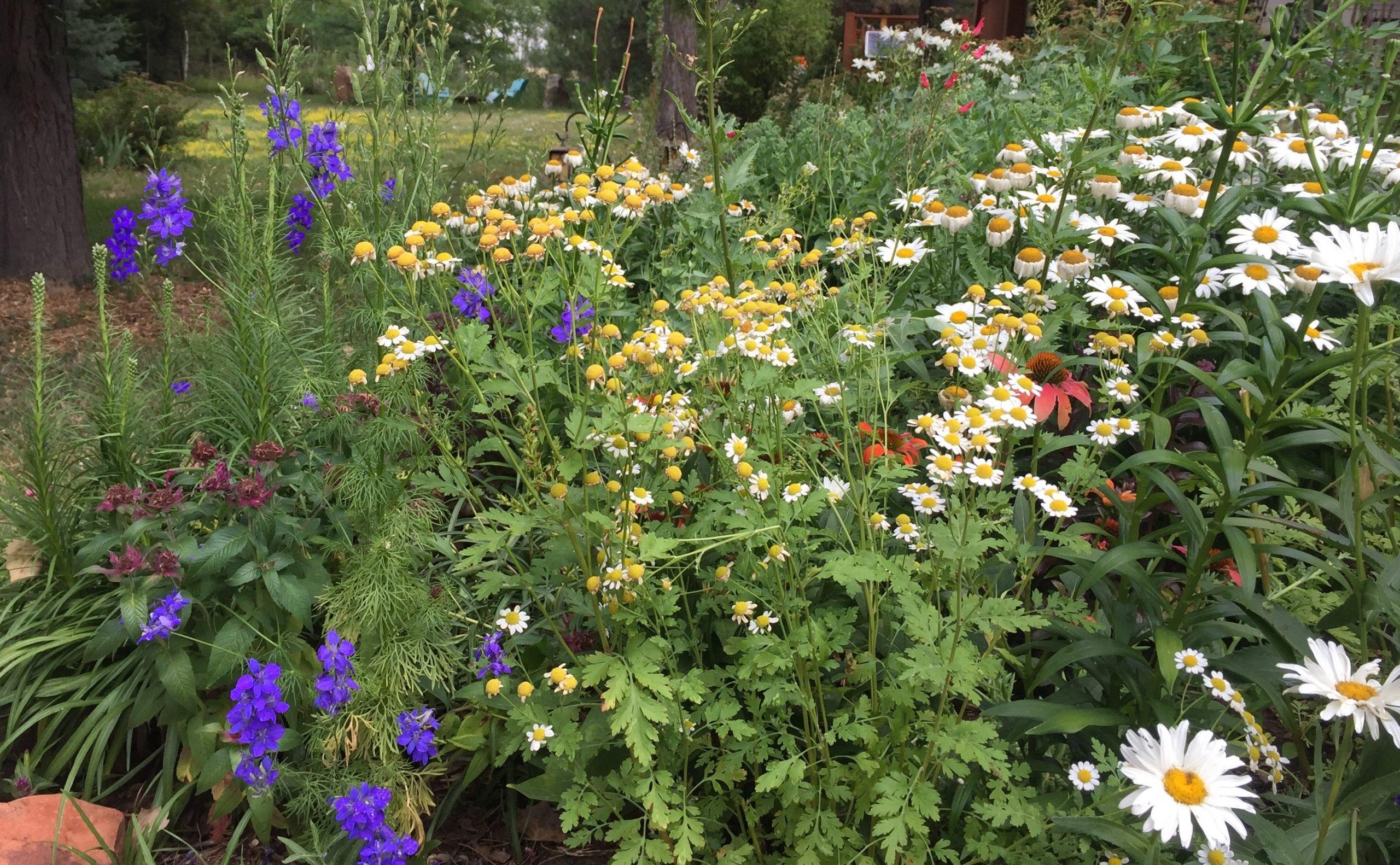 Laura C garden 3