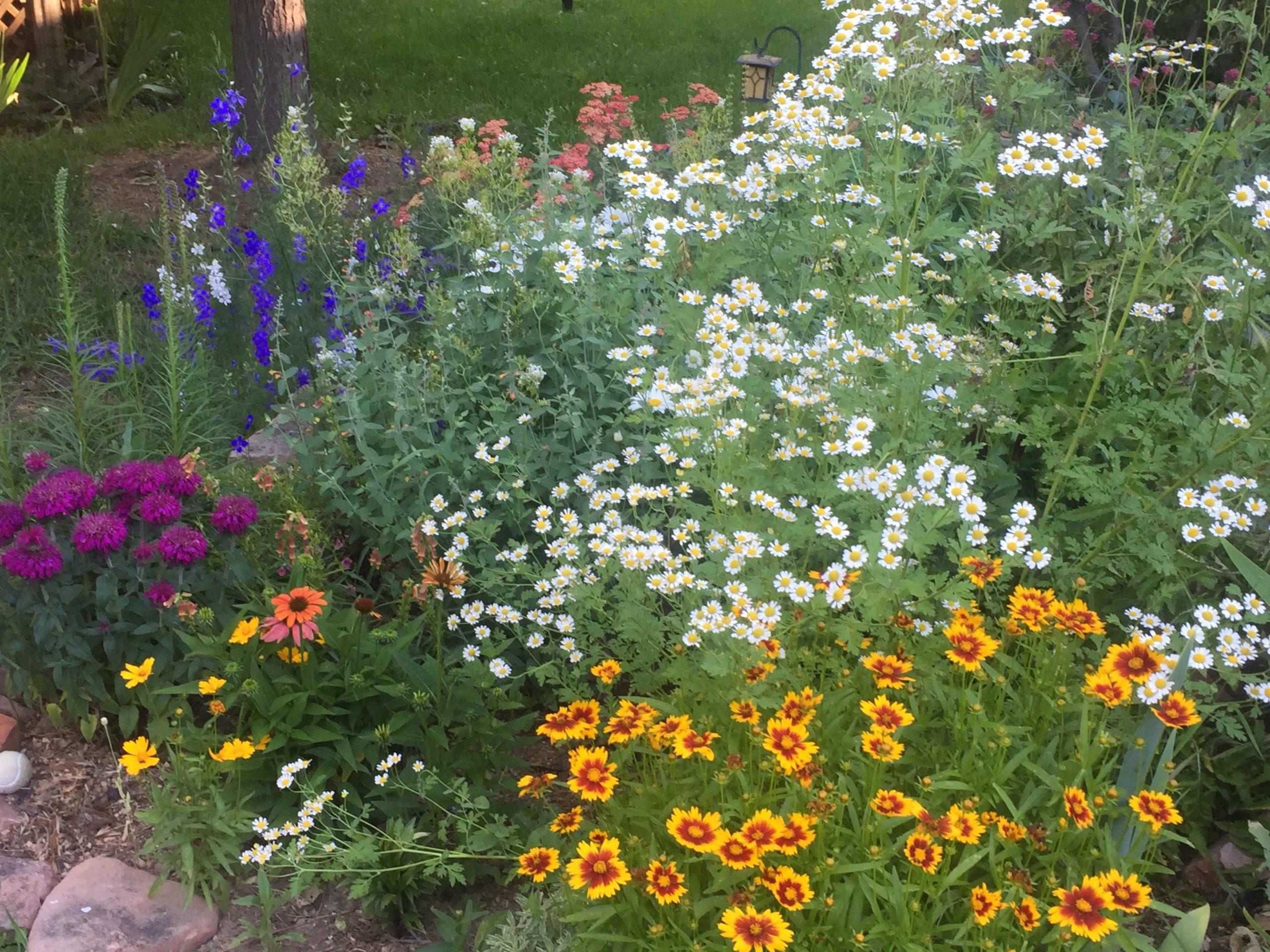 Laura C garden 5