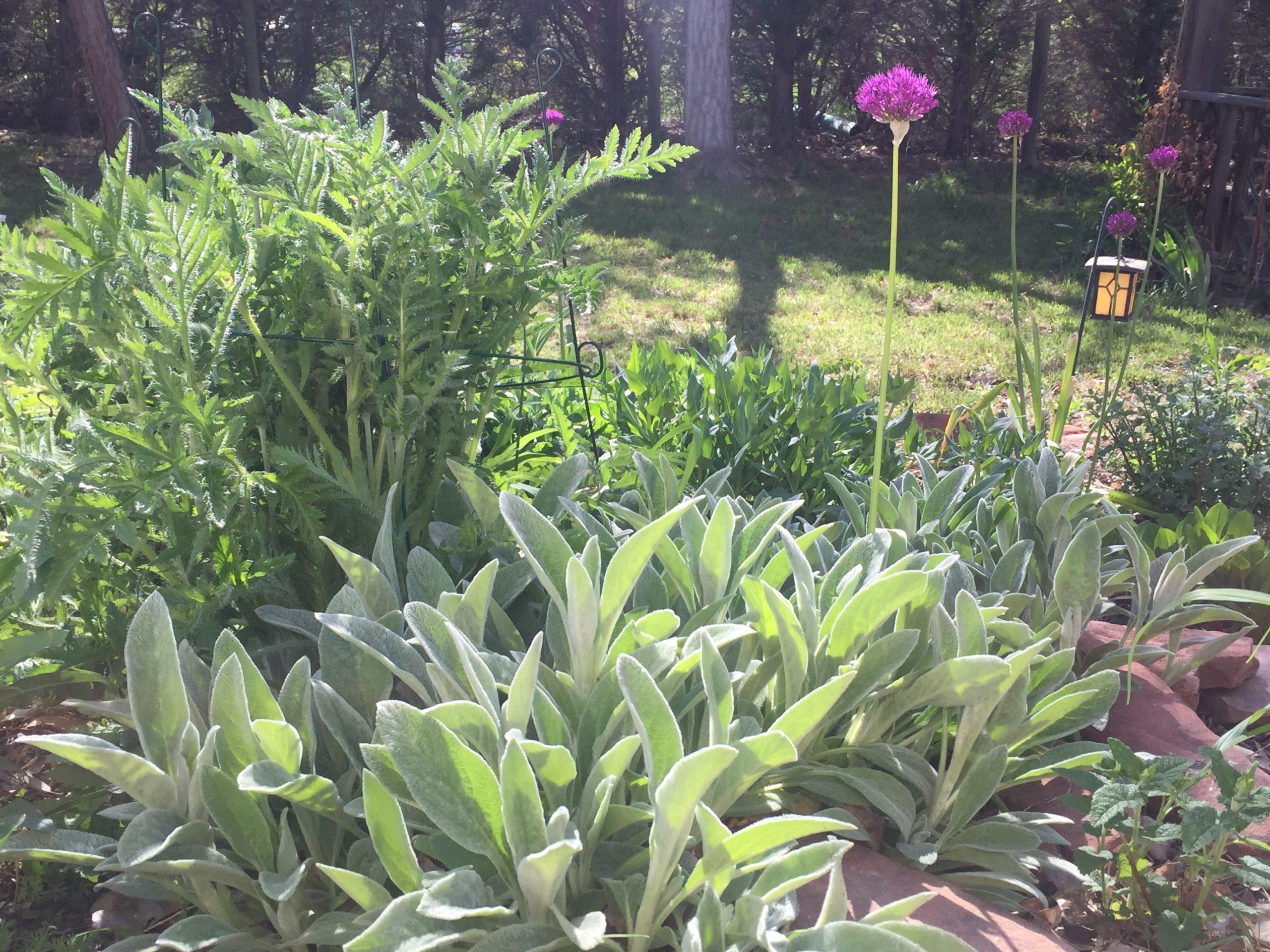 Laura C garden 6