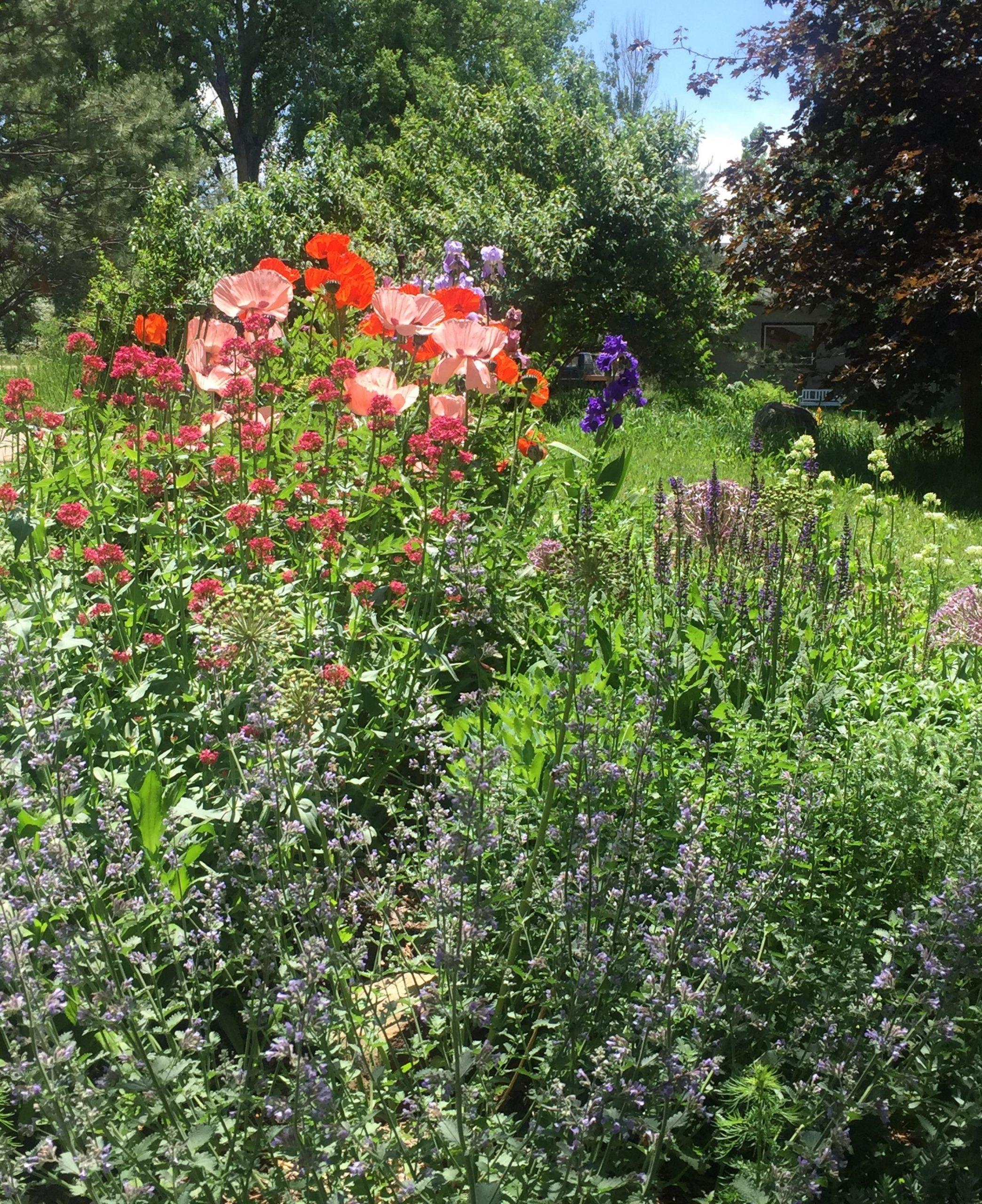 Laura C garden 7 (2)